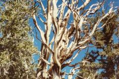 Rainer_Hergenroether_Bristlecone_Pine_Forest_USA-0