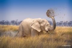 Harald_Mayerthaler_Elefant