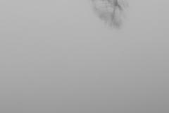 Franz_Hohnheiser_See_im_Nebel