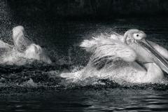 Heike_Buchborn_Splash