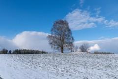 Anke-Baum