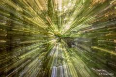 strahlender-Wald