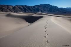 Carsten Heinelt - Mesquite Flat Sand Dunes