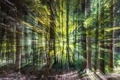 Rainer Hergenröther - Sonnenstrahlen im Wald