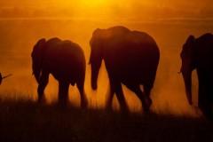 Franz_Hohnheiser_Elefantenzug