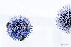 Planet Blume