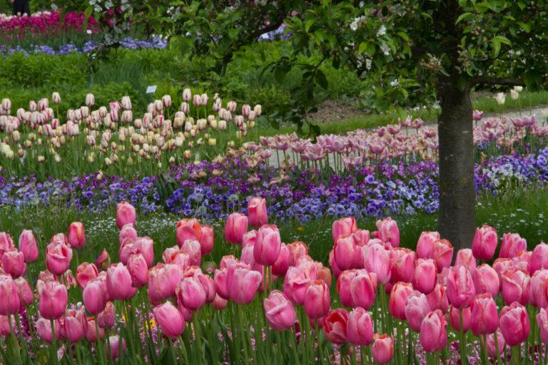 Read more about the article Botanischer Garten München