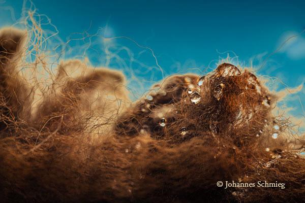 Alpakawolle